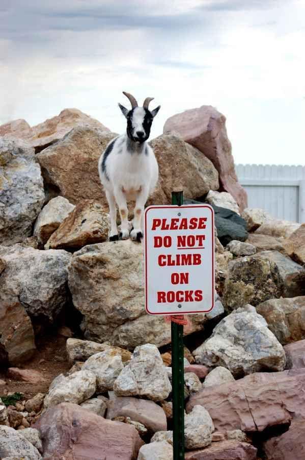 climb on rocks.jpg
