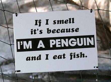 penguin smell