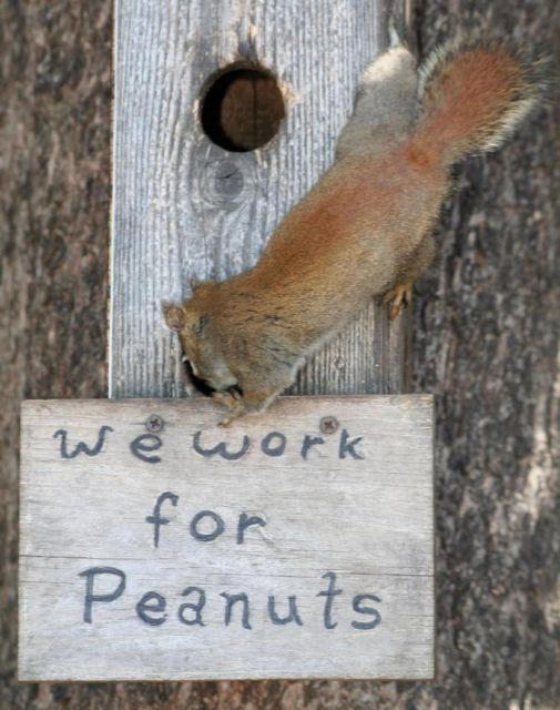 we_work_for_peanuts